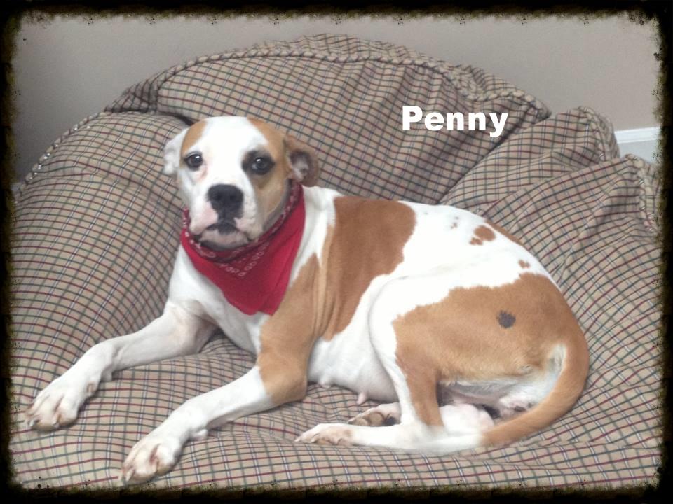 penny4.jpg