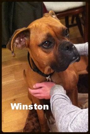 winston 6.jpg