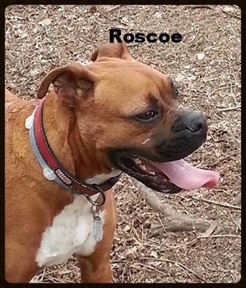 roscoe-new-2.jpg