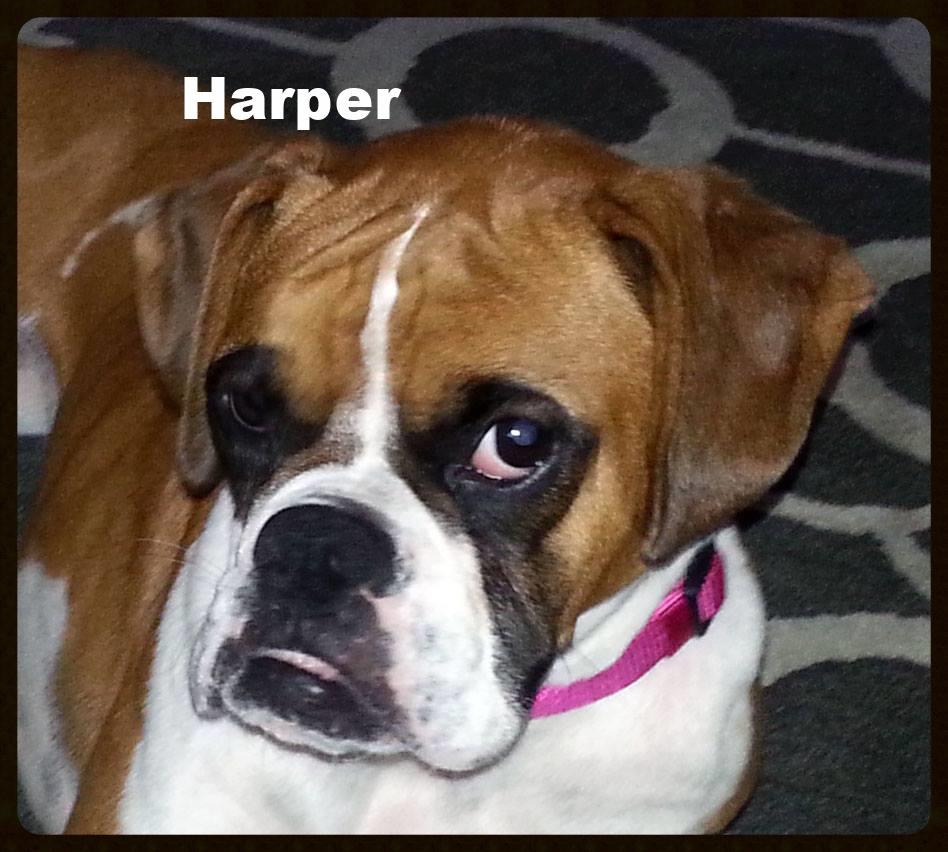 harper.jpg