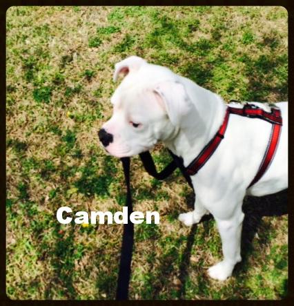 camden boy2.jpg