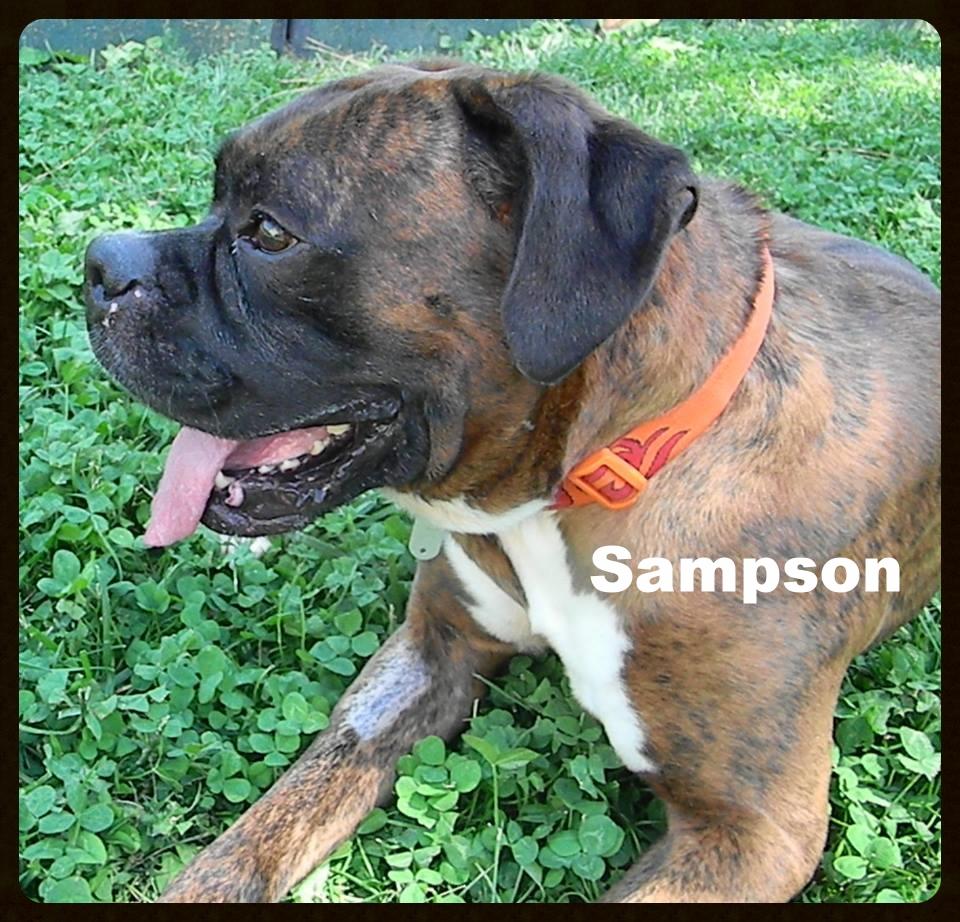sampson1.jpg
