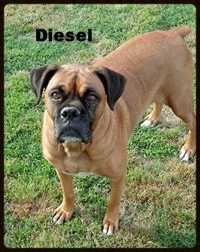 diesel-new.jpg