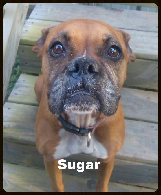 sugar new1.jpg