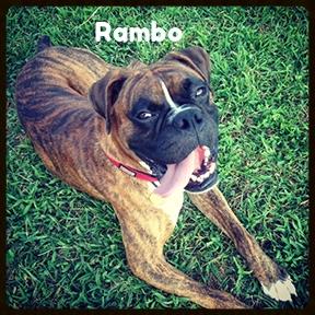 rambo 4.jpg