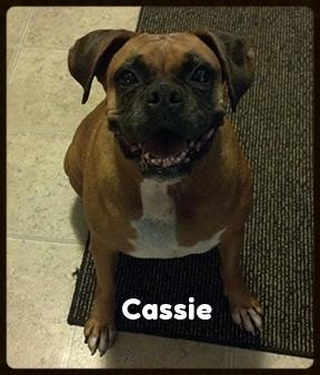 cassie 1.jpg