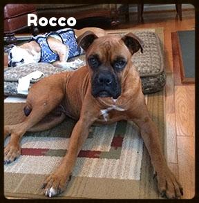 rocco 1.jpg
