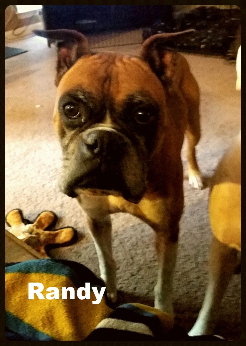 randy 2.jpg