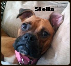 stella fawn pup 3.jpg