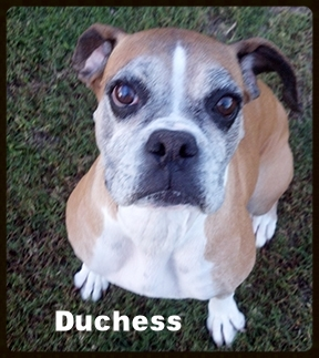 Dutchess 3.jpg