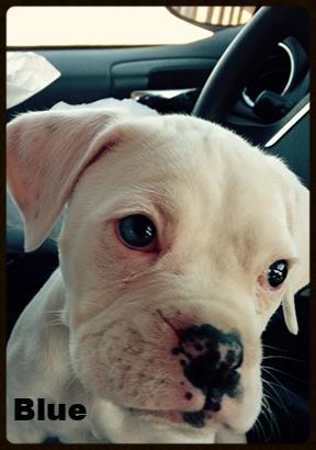 blue puppy 2.jpg