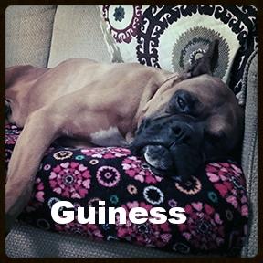 guiness 1.jpg