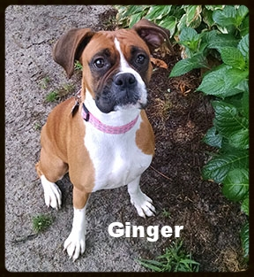 ginger new 1.jpg
