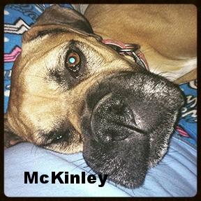 mckinley 2.jpg