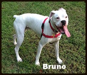 bruno new 10.jpg