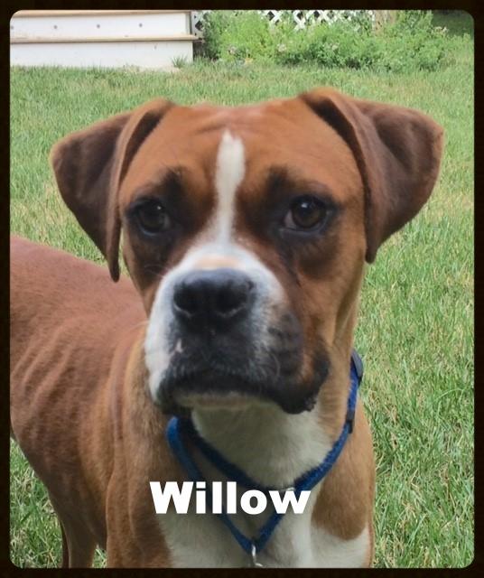 willow a.jpg