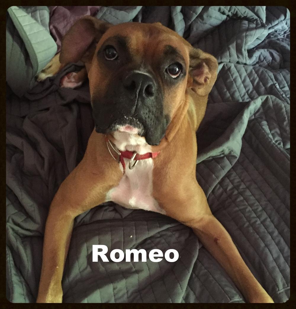 romeo new 2.jpg