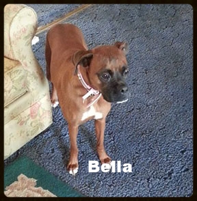 bella new b 1.jpg