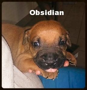 obsidian5.jpg