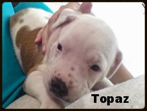 topaz2.jpg