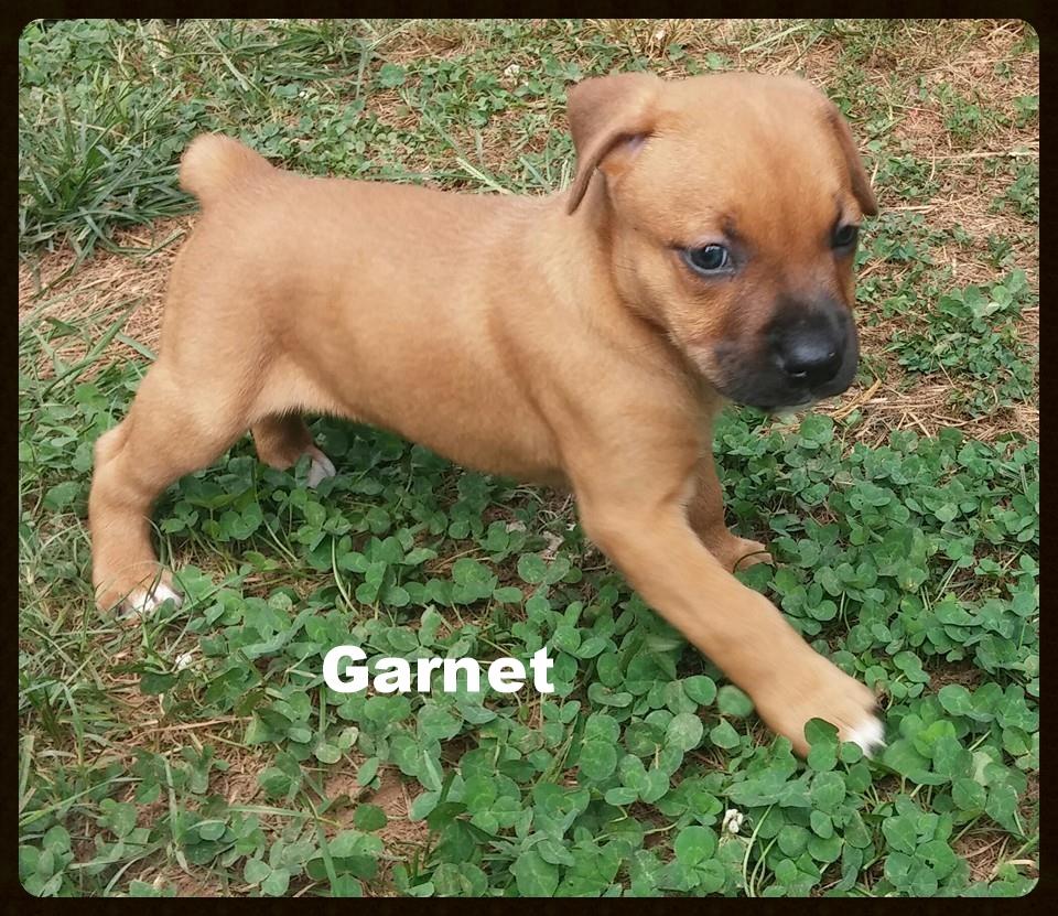 garnet 4.jpg