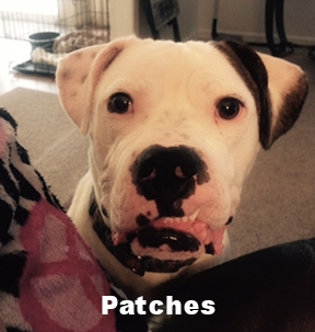 patches 1.jpg