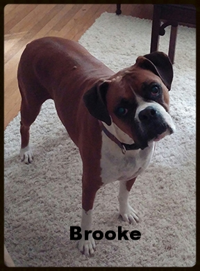 brooke dog.jpg