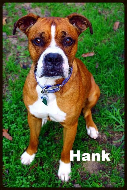 hank new 5.jpg