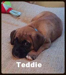 teddie.jpg