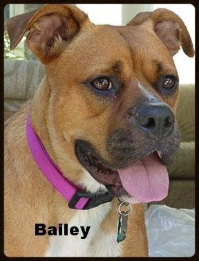 bailey 6.jpg