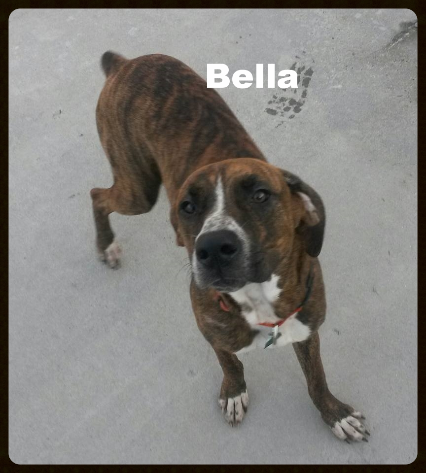 bella pup new.jpg