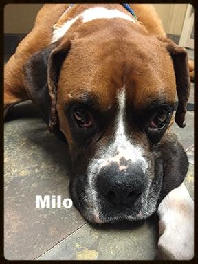 milo new 1.jpg
