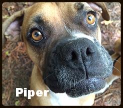 piper new a.jpg