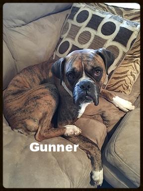 gunner new 1.jpg