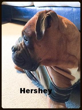 hershey 7.jpg