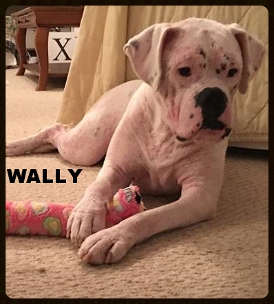 wally new 3.jpg