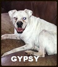 gypsy new.jpg