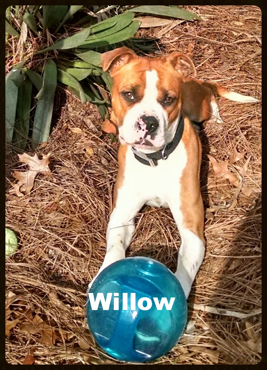 willow new 8.jpg
