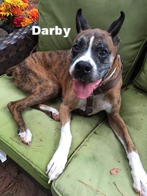 darby new.jpg