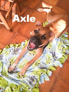 axel+puppy.jpg