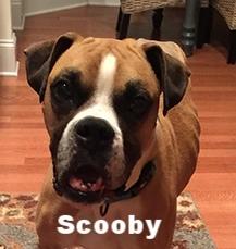 scooby+tripod+2.jpg