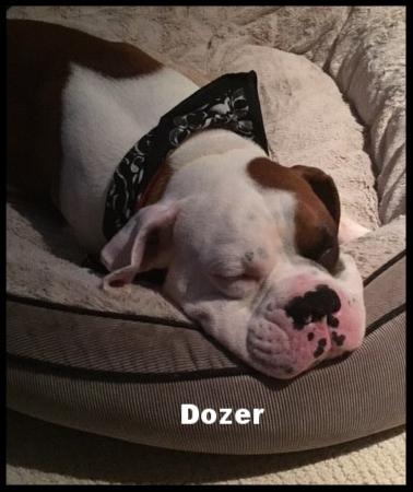 dozer3.jpg