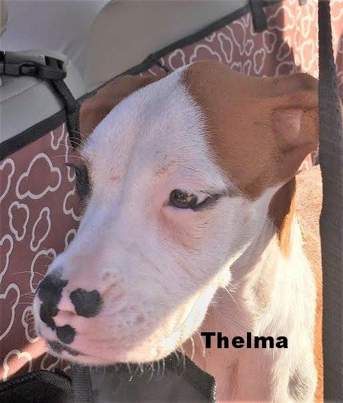 thelma5_002.jpg