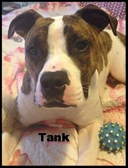 tank new 8.jpg