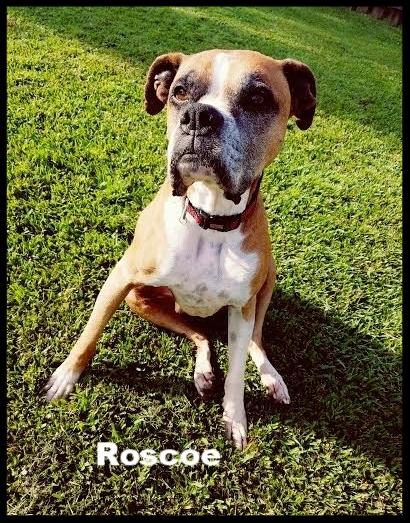 Roscoe.jpg