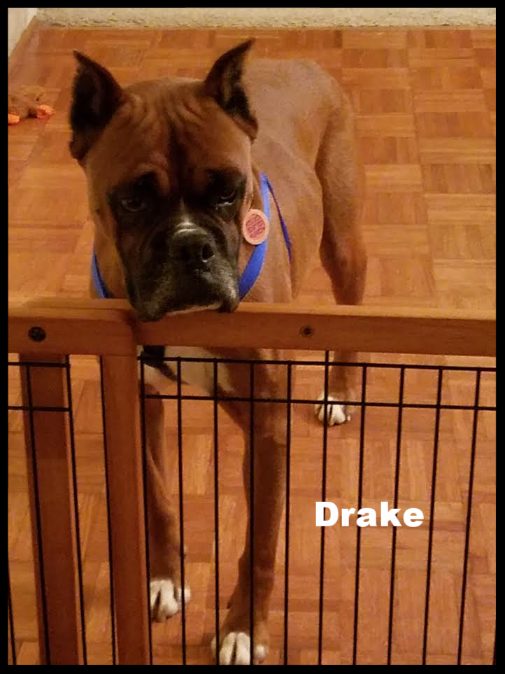 Drake2.png