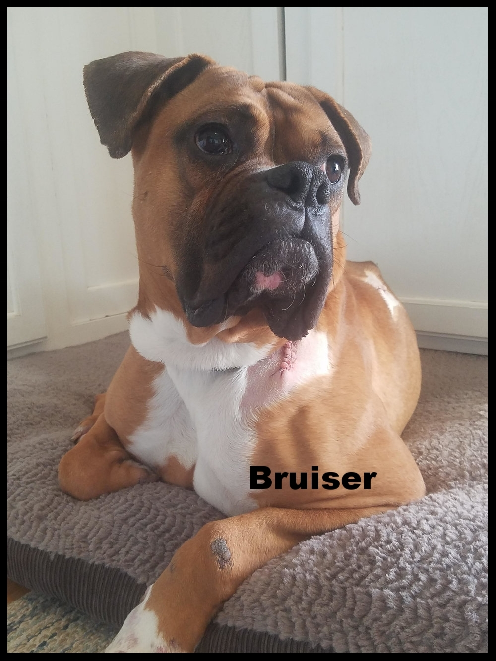bruiser.jpg