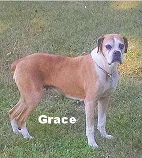 grace+new+2.jpg