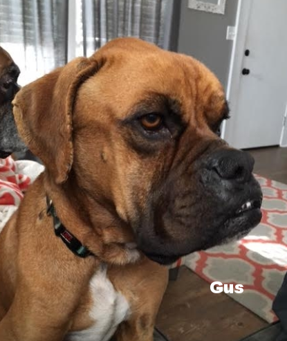 Gus.png