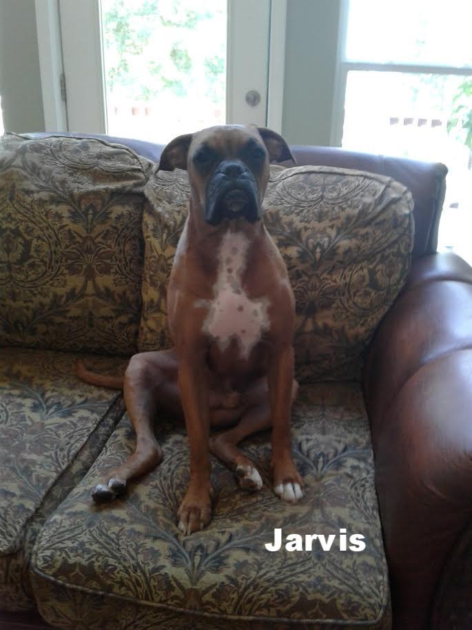 Jarvis.jpg